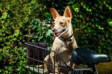 Best Electric Bike Dog Carriers